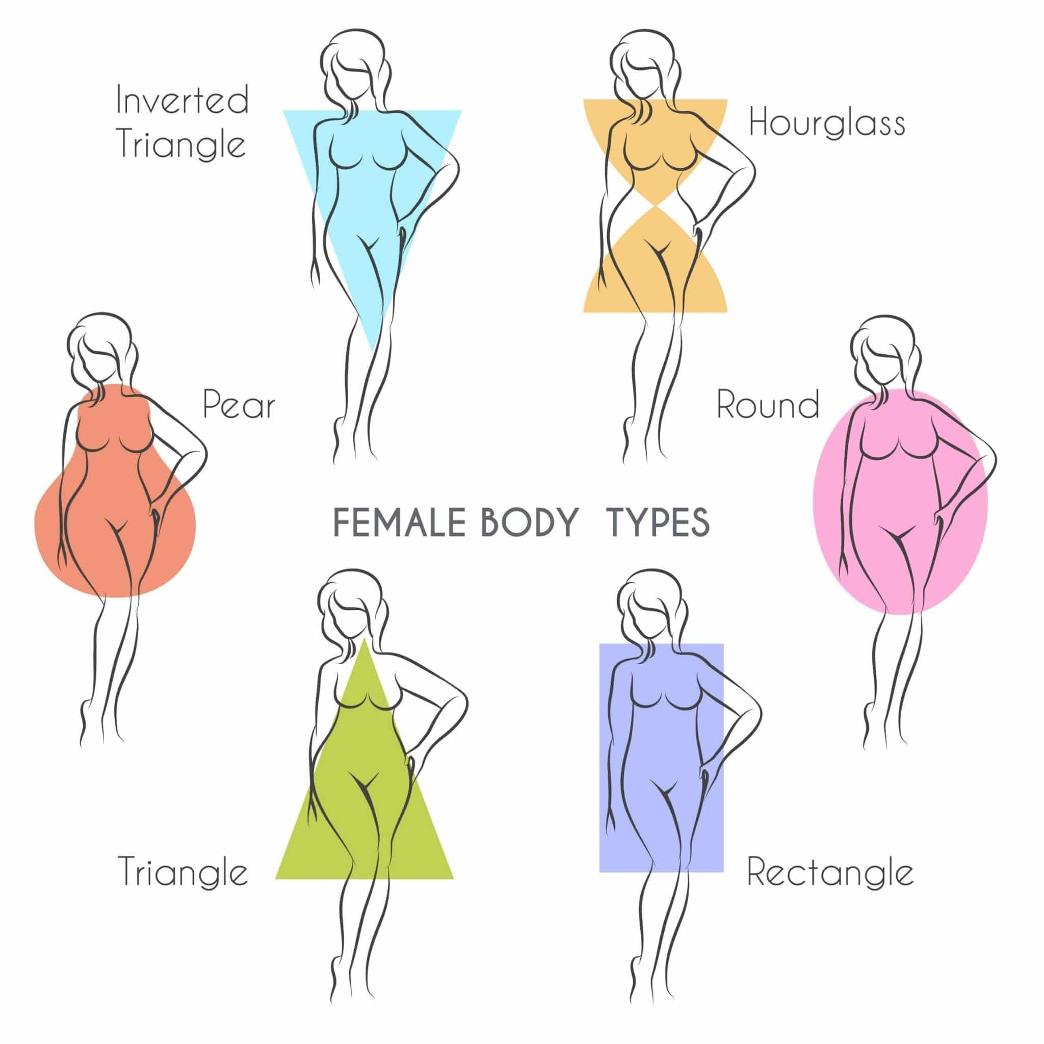 illustration of different female sizes